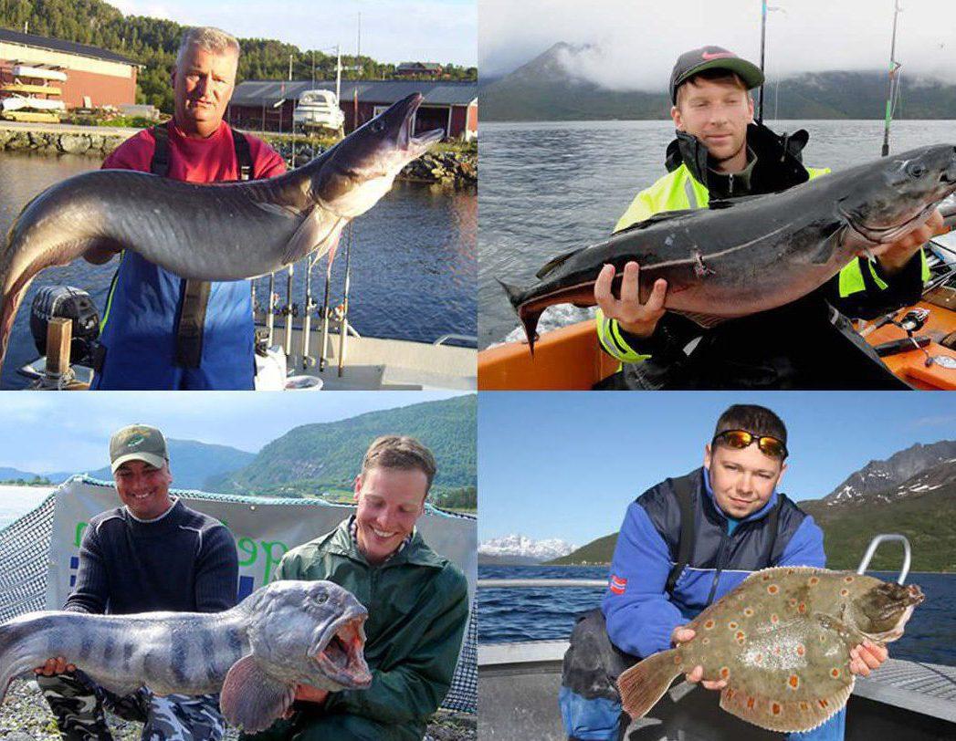 BIG ONE-Hitliste Meeresfische