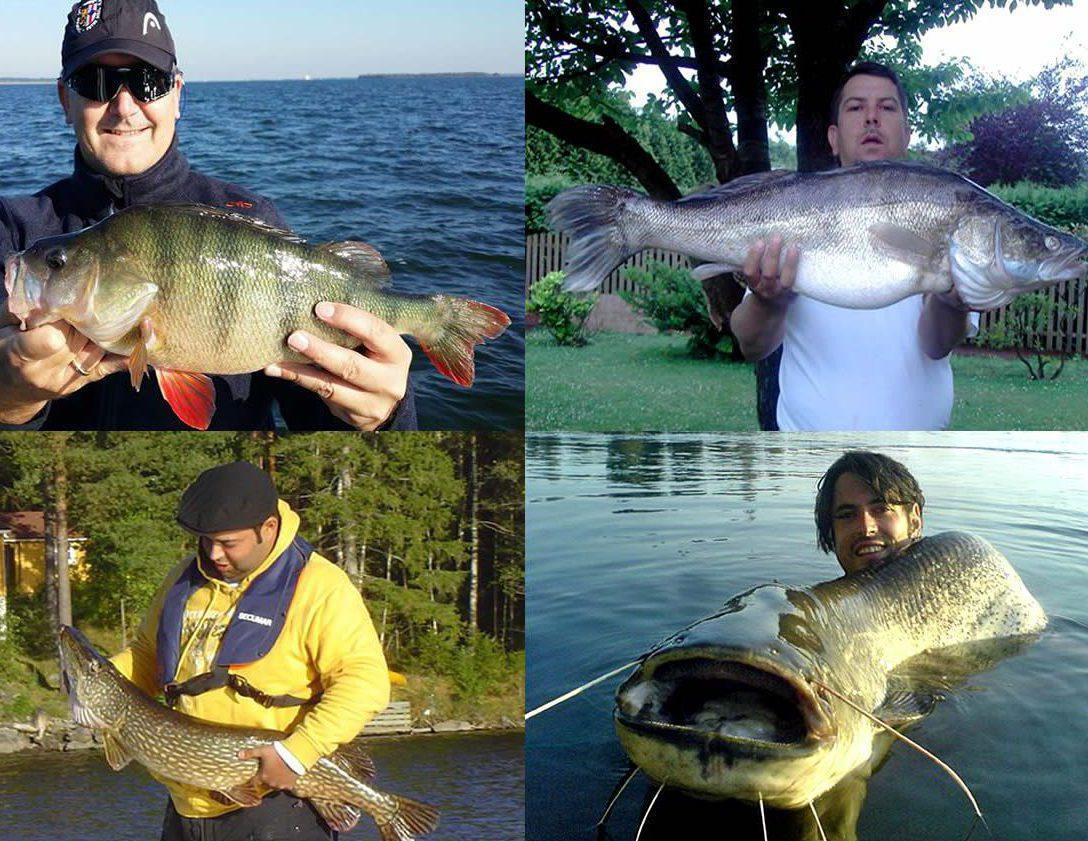 BIG ONE-Hitliste Raubfische