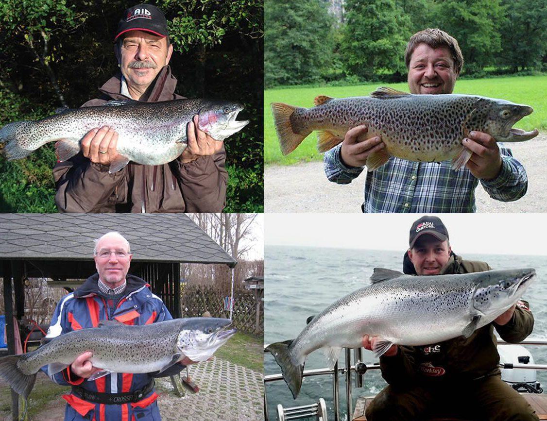 BIG ONE-Hitliste Salmoniden