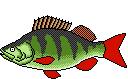 Fischart Barsch Schonzeiten