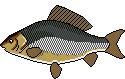 AiD Angelportal Fischlexikon Fischart Giebel