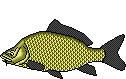 Fischart Schuppenkarpfen BIG ONE-Hitliste