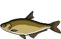 AiD Angelportal Fischlexikon Fischart Zope