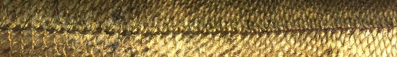Foto AiD Angelportal - Kategorieseite Fischlexikon Fischart Aland