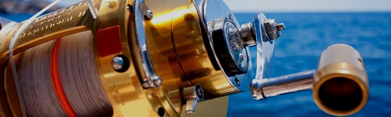 Foto AiD Angelportal - Kategorieseite BIG ONE-Hitlsite - Fischart Weisser Thunfisch