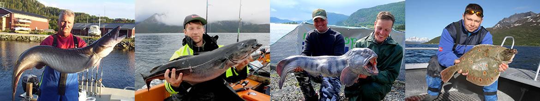 Foto AiD Angelportal - Kategorieseite BIG ONE-Hitliste Meeresfische