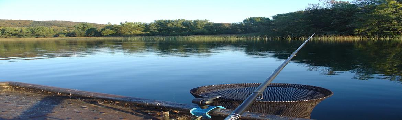 Foto AiD Angelportal - Kategorieseite BIG ONE-Hitliste - Fischart Schuppenkarpfen
