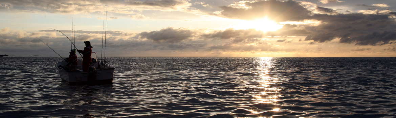 Foto AiD Angelportal - Kategorieseite BIG ONE-Hitliste - Fischart Steinbeisser