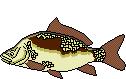 Fischart Karpfen Schonzeiten