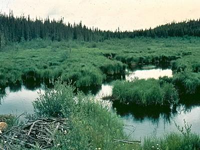 AiD Fotogalerie - Angeln in Kanada 1984 - Foto 18