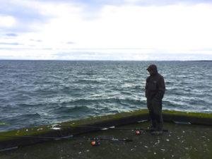 AiD Fotogalerie - Angeltour Dänemark Insel Mön 2016 - Foto 38