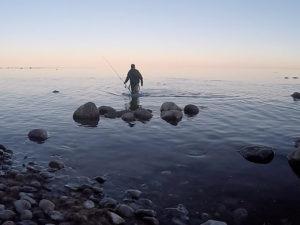 AiD Fotogalerie - Angeltour Dänemark Insel Mön 2016 - Foto 72