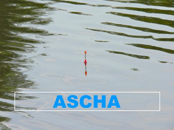 Fluss Ascha - Angelgewässer in Deutschland - Bayern - Dieterskirchen - Foto