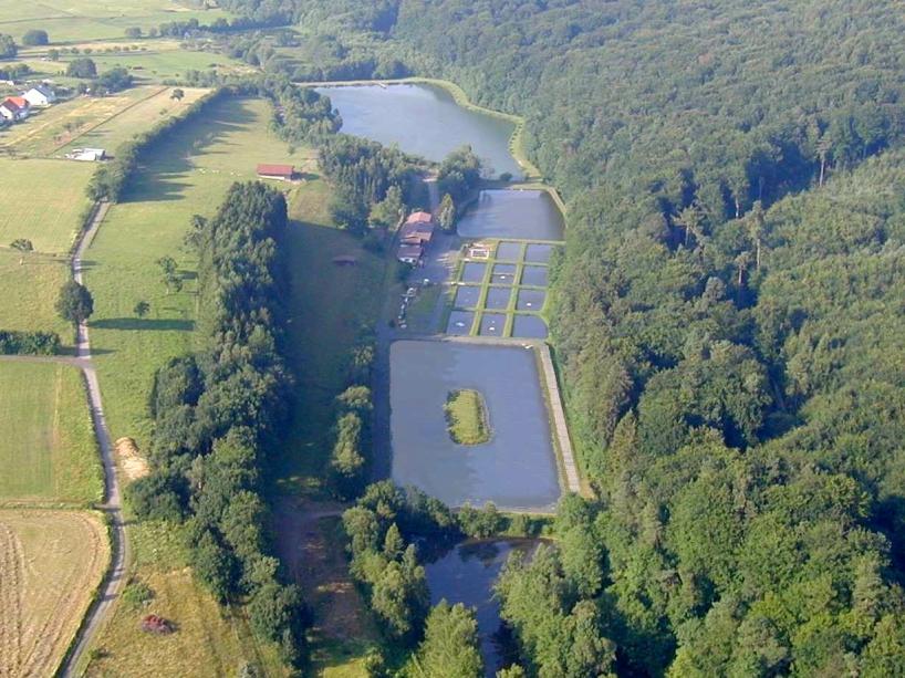 Teichanlage Blaeser - Oberelbert - Rheinland-Pfalz - Standard-Anzeige - Forellenteiche - Foto 1