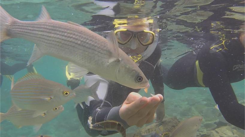 Video - AiD Angelportal - Schnorcheln im Atlantik - Fuerteventura - Füttern von Meeräschen und Goldstriemenbrassen