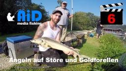 AiD media fishing - Videofilm Nr. 6 - Angeln auf Störe und Goldforellen