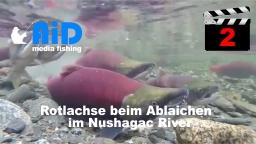 AiD media fishing - Videofilm Nr. 2 - Rotlachse beim Ablaichen im Nushagac River