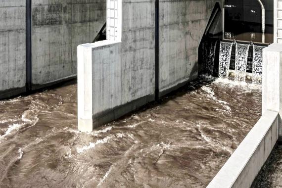 AiD Presse-News 2019 - Schäden an Aalen durch Wasserkraft-Turbinen