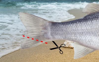 Markierung - Meeresfisch Wolfsbarsch - Fischereibestimmungen 2019 Frankreich